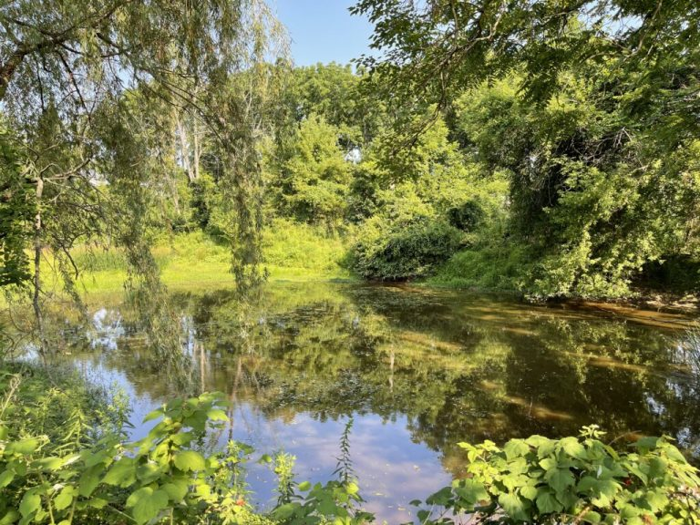Pond-1024x768